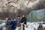 13.01.2017 - Monitoring of goats in the area of Geological museum